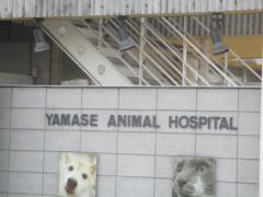 やませどうぶつ病院