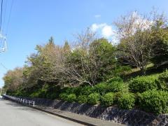 横井第1緑地
