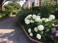 千代田緑道