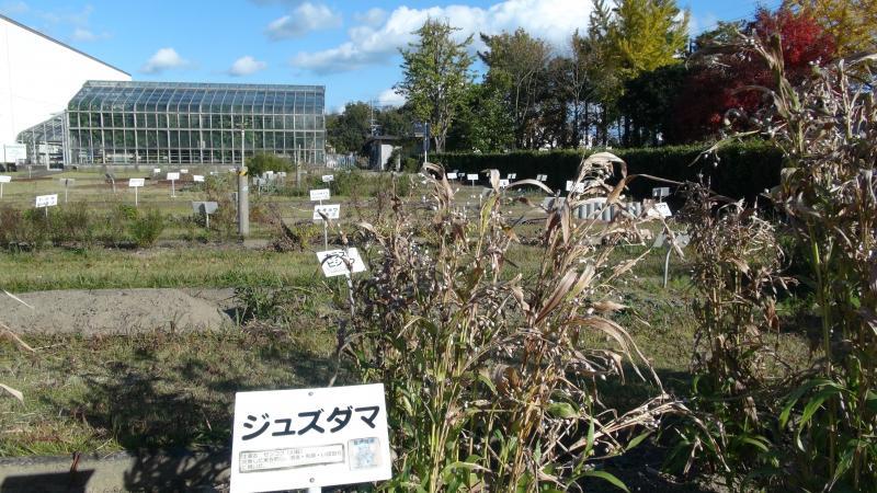 薬草園と温室