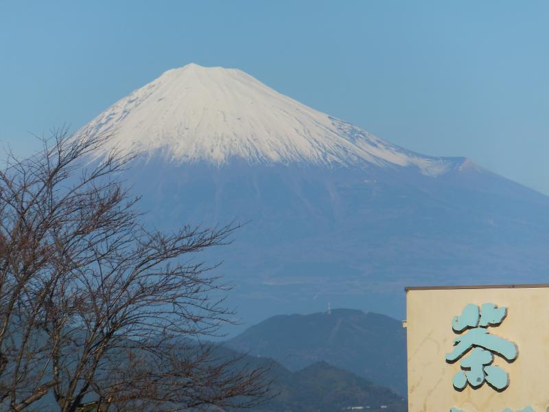 お茶と富士・・・日本平より
