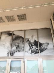 イオンペット PeTeMoりんくう泉南店