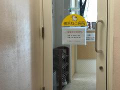 横浜ねこ病院