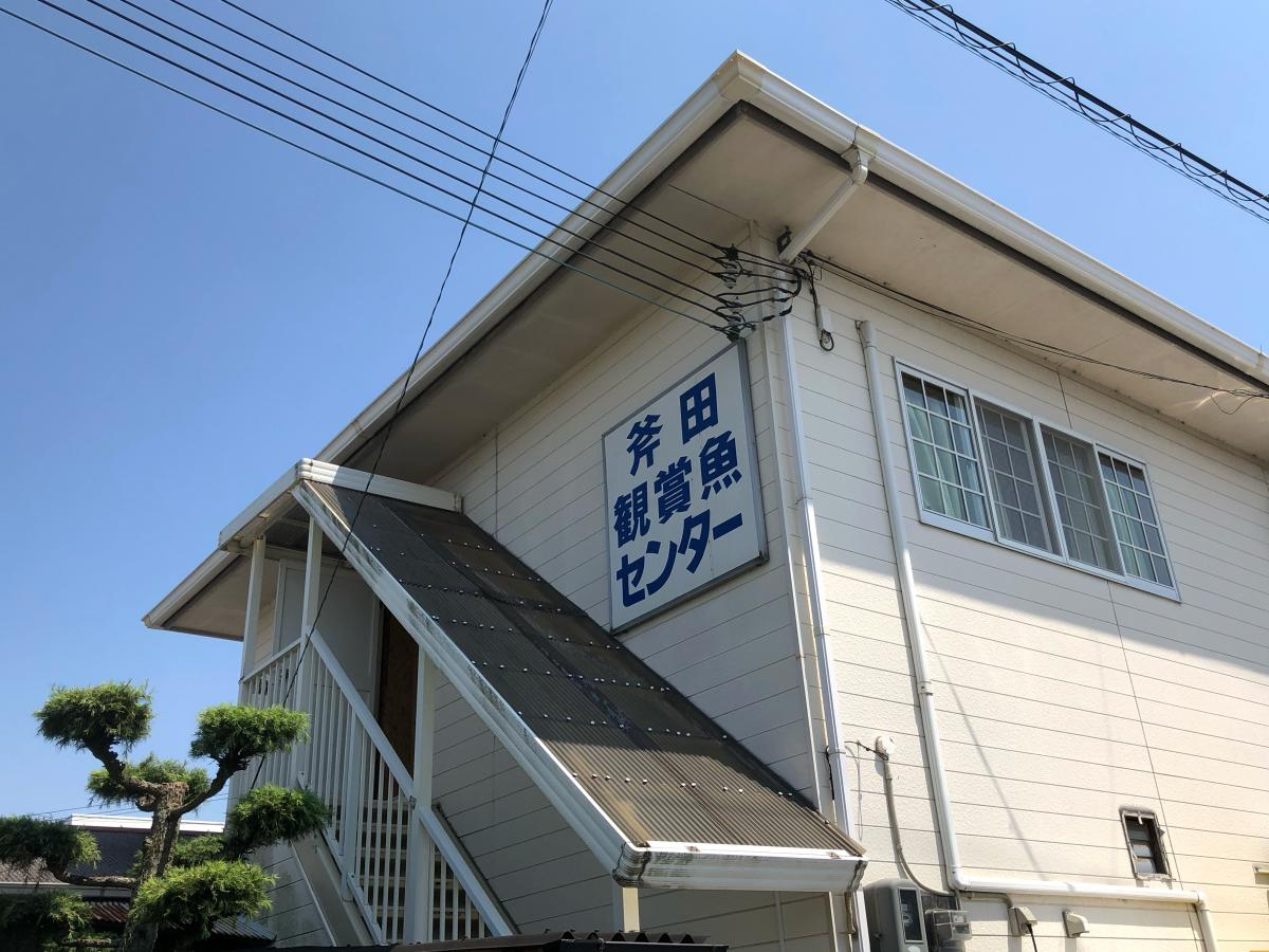 魚 斧田 センター 観賞