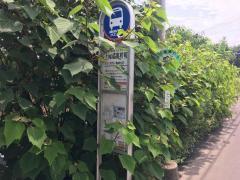 「上尾橘高校前」バス停留所