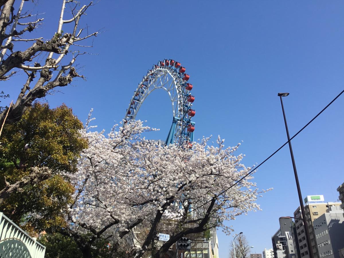 桜の向こうに響く絶叫!