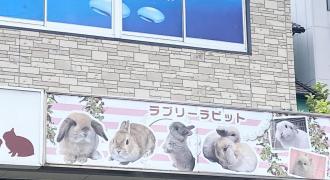 ラブリーラビット名古屋本店