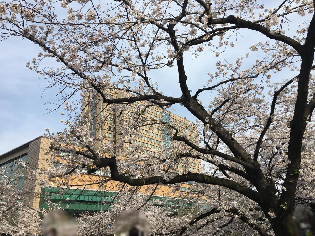 桜越しに見る病院棟遠景