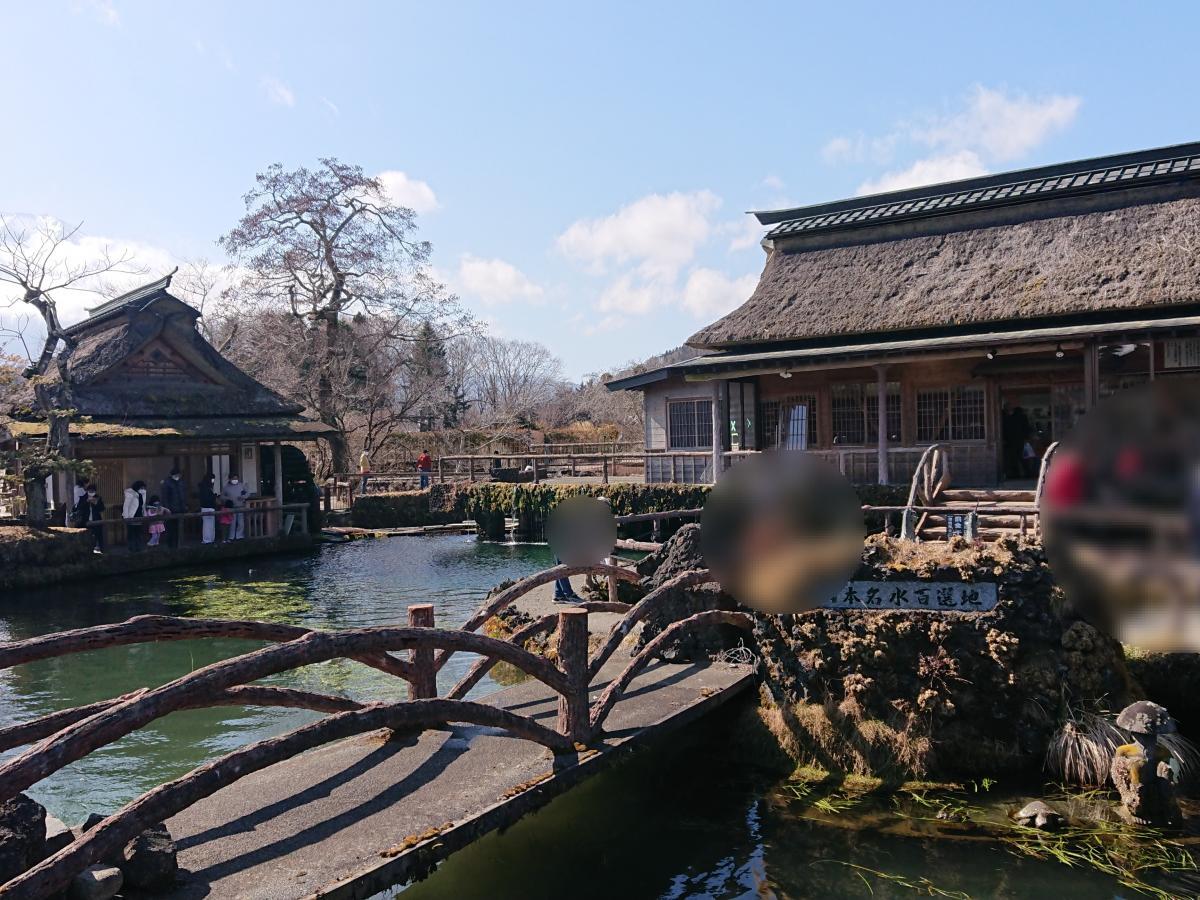 忍野八海 鯉の池